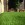 Hampshire artificial lawns - an easi and lazy lawn